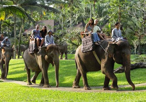 gajah-taro