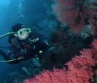 nusa dua diving