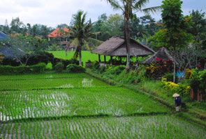 puri-dalem-cottages-view